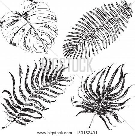 Set of graphic illustration of tropical palm leaves isolated on white background. Vector ink illustration