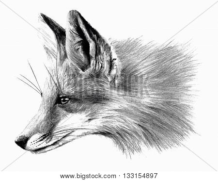 Fox profail isolated on white background. Hand drawing