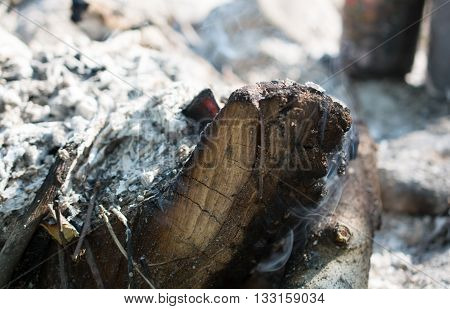 Unburned firebrand in the fire. Surrounded by ash.