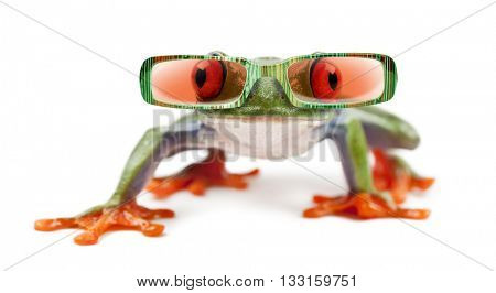 Red-eyed Treefrog, Agalychnis callidryas wearing sunglasses, isolated on white