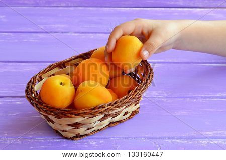 Child takes apricot from basket. Child holds an apricot in her hand. Ripe juicy fruits in basket. Source of calcium, potassium, iron, beta-carotene, fiber. Healthy nutrition. Purple wooden background