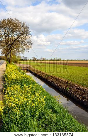Rural Dutch landscape in springtime with a ditch with newly fitted wooden revetment.
