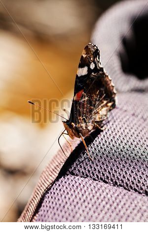 butterfly red admiral on canvas note shallow depth of field poster