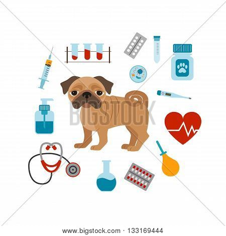 Vet cartoon concept. Vector veterinary dog illustration. Concept of flat veterinary clinic icons. Colorful veterinary medicine concept  for your design. Veterinary dog breed pug isolated.