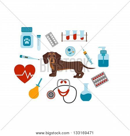 Vet cartoon concept. Vector veterinary dog illustration. Concept of flat veterinary clinic icons. Colorful veterinary medicine concept  for your design. Veterinary dog breed dachshund isolated.