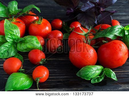Tomatoes On Vine And Green Basil