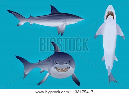 Vector Hungry agressive and scary shark fish silhouette set