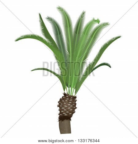 Exotic tropical high detailed palm tree isolated