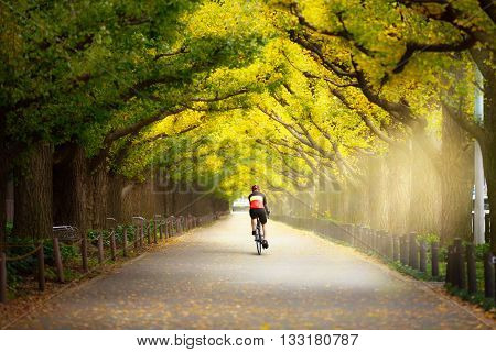 Cyclist on the beautiful gingko trees at the street of Gingko trees Tokyo Japan Cyclist ride the bike exercise on nature concept