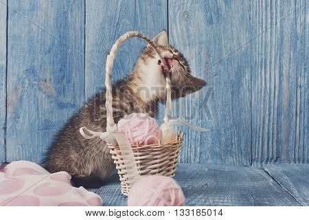 Grey kitten gnawing straw basket. Playful grey kitten. Sweet adorable kitten on a serenity blue wood background. Small cat. Funny kitten with copyspace