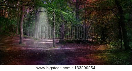 Ethereal Woodland  - Wide woodland scene with a subtle light shaft falling on path and unusual dark rainbow coloring with copy space