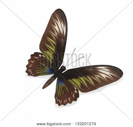 Brown and green butterfly isolated on white