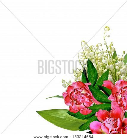 peony flowers isolated on white background. spring flowers