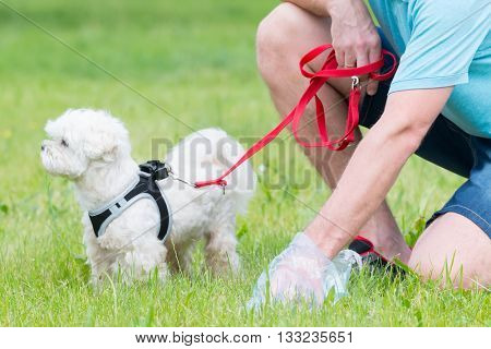 Owner cleaning up after the dog with plastic bag poster