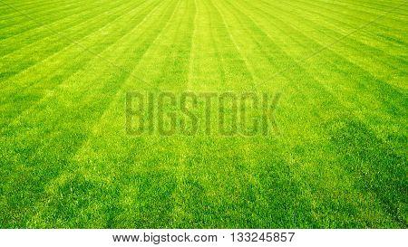 Bowling green cut grass lines background. Texture