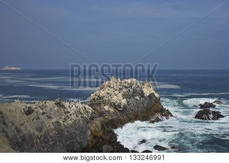 Seabirds on guano covered rocks on the coast of Chile where the Atacama Desert meets the Pacific Ocean.