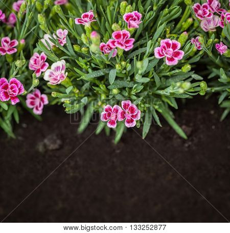 Flowers in grass growing from natural clean soil. Copy-space on the ground