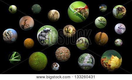 Portraits of insects in the balls - spheres on a black background. Concepts and Topics, Concepts, environment, nature, ecology, the study of species, red data book, endangered species of insects, biology