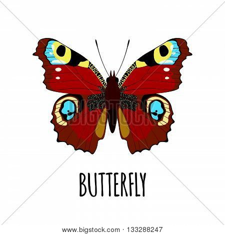 Realistic butterfly in flat style. Butterfly isolated on white background. Vector illustration