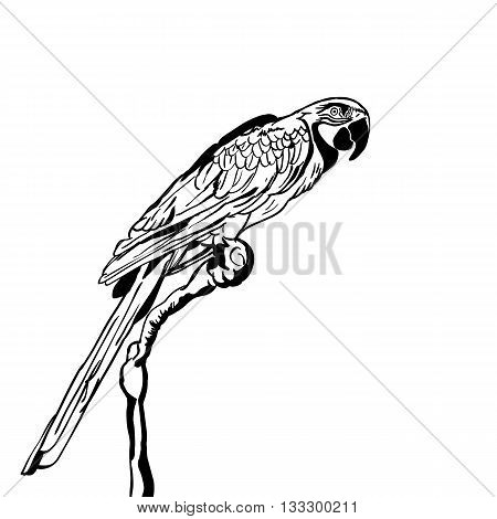 Vector Hand Drawn Illustration Of Tropical Parrot Bird. Isolated Monochrome Parrot. Black And White