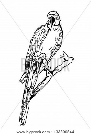 Vector Illustration Of Tropical Ara Parrot Sitting On Tree. Isolated Monochrome Parrot Bird. Black A