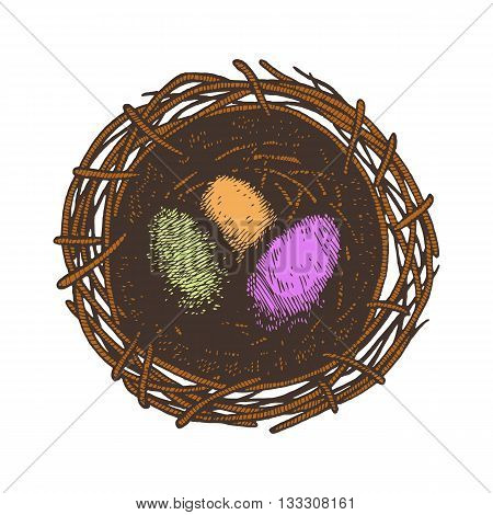Easter eggs and nest. Isolated. Colored eggs and nest on white background