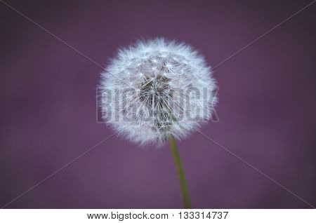Beautiful vintage style abstract image of dandelion