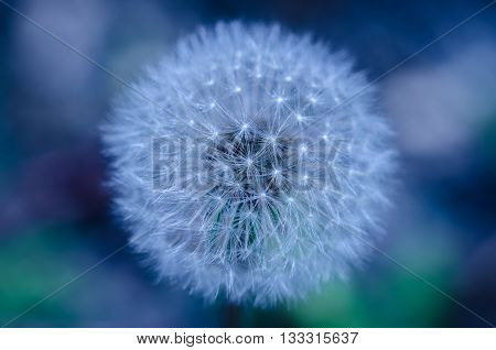 Beautiful abstract image of a blue flower