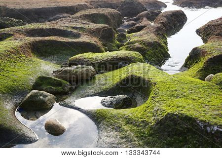 Green moss on the rocky beach - background