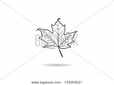 Creative Vector Abstract For Maple Leaf