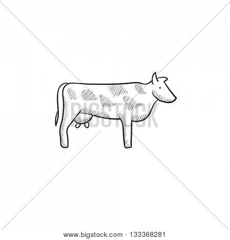 Cow sketch icon for web, mobile and infographics. Hand drawn cow icon. Cow vector icon. Cow icon isolated on white background.