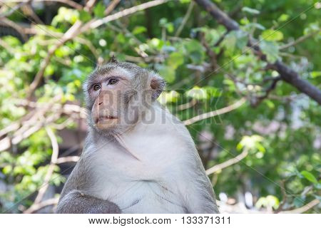 Monkey on tree in  forest nature Thailand