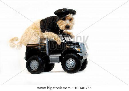 Cool Dude In Getaway Car