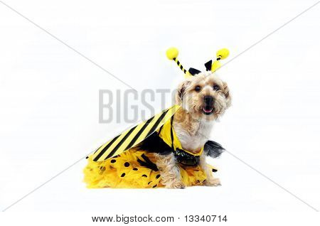 Bright Eyed Bumble Bee