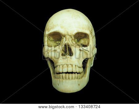 Front view of human skull on isolated black background
