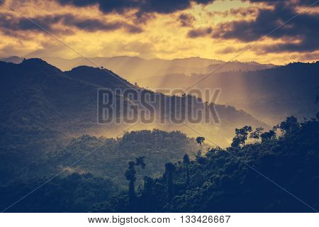 The perfect combination of natural beauty at national park. The fog is swinging between trees. Evergreen forest against beautiful sky and sunbeam. Idyllic rural view of pretty. Vintage tone. Outdoors.