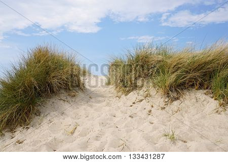 marram grass lined trail leading up sand dune at baltic seaside