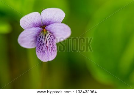 Closeup of beautiful spring flower in forest