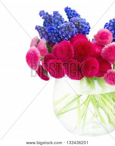 bunch of Muscari and Daisy Flowers in vase close up isolated on white background