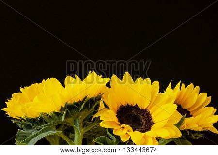 Beautiful sunflowers as background with space for your text