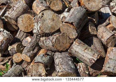 Sawed poplar tree trunk. Cross section of the timber, cut trees, firewood stack for the background. Close up pile of logs background. Stack of freshly cut poplar timber. Heap of wooden log in a forest