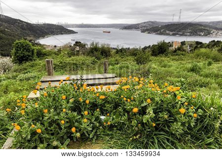 Istanbul Bosphorus view from high hill of Anadolu Kavagi with an orange flowers foreground