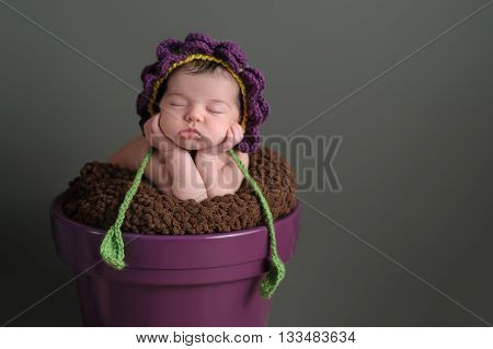A two week old newborn baby girl sleeping in a purple flower pot. She is wearing a crocheted flower bonnet. Shot in the studio on a gray background.