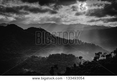 The perfect combination of natural beauty at national park. The fog is swinging between trees. Evergreen forest against sky and sunbeam. Idyllic rural view of pretty. Black and white tone. Outdoors.