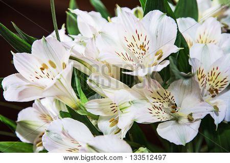 Festive bouquet of beautiful white hibiscus flowers. Big petals and pistil. Beauty in nature. Wedding bouquet. Natural decoration. Closeup scene. Hibiscus stigma.
