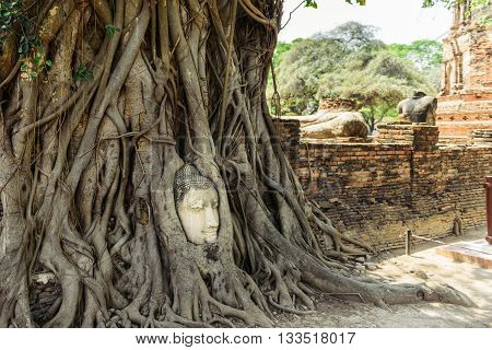 The head of Buddha in tree roots in Wat Mahatat Ayutthaya