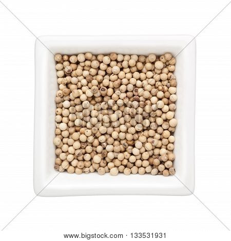 White peppercorns in a square bowl isolated on white background