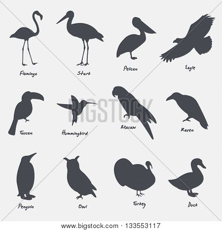 Set silhouettes of birds with English names vector illustration