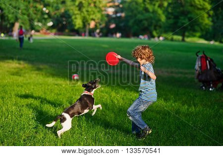 The boy plays on a lawn with dog. The boy has raised a hand with disk up. His beautiful brawny doggie became on hinder legs. He tries to take away a disk from the owner. Funny game.