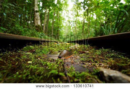 Arion Slug (Gastropod) on Railway Line in Woods